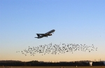 Reducing Wildlife Collisions with Aircraft Collection<br>